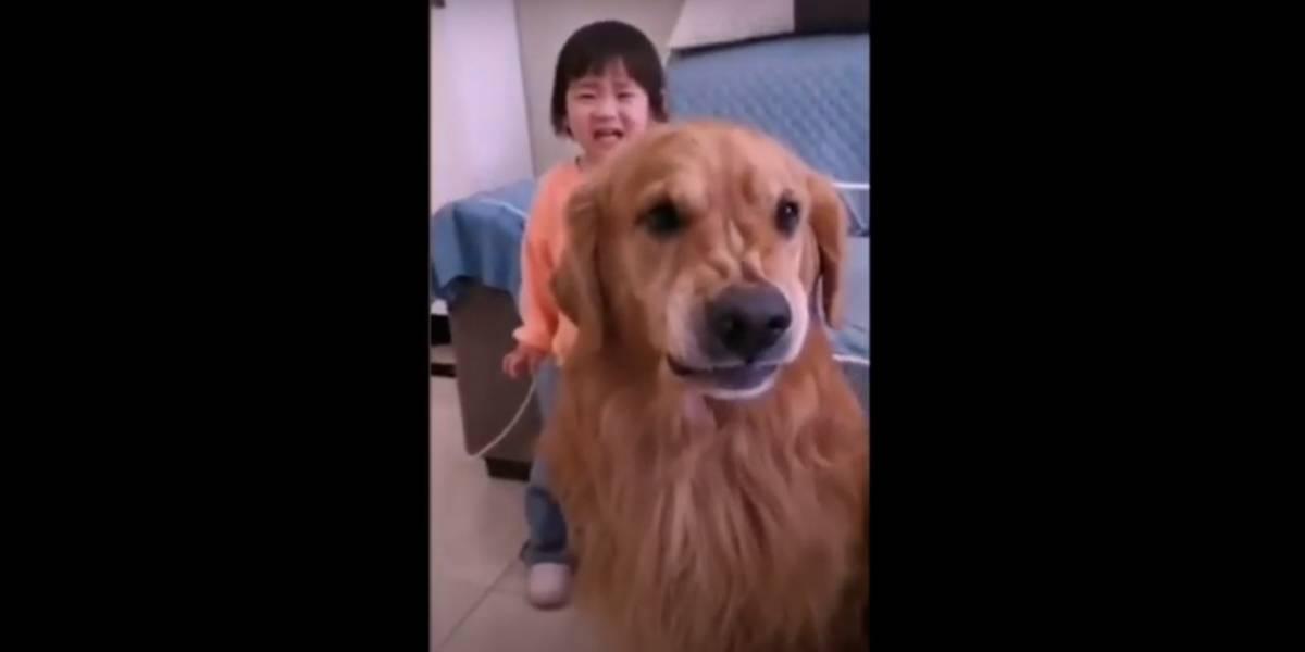 Vídeo: Cachorro viraliza após proteger criança de levar bronca da mãe