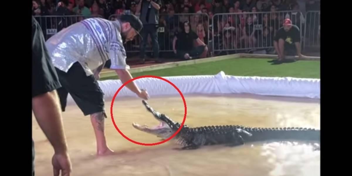 Vídeo: Crocodilo arranca parte do dedo de tratador durante apresentação nos Estados Unidos