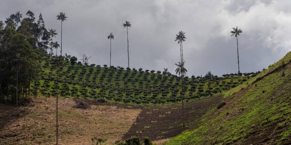 Oro Verde: el monocultivo de aguacate amenaza el medio ambiente en Cajamarca
