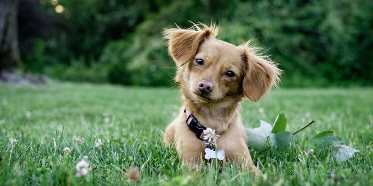 10 nomes de cães mais engraçados
