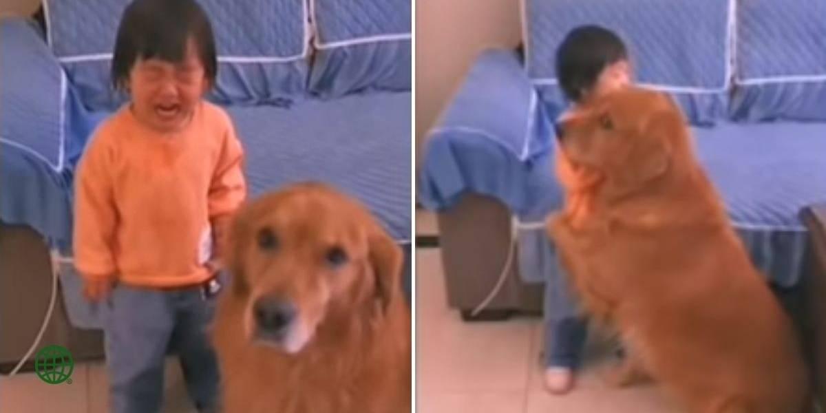 (VIDEO) Perrito defendió a niña del regaño de su madre y se hace viral en redes