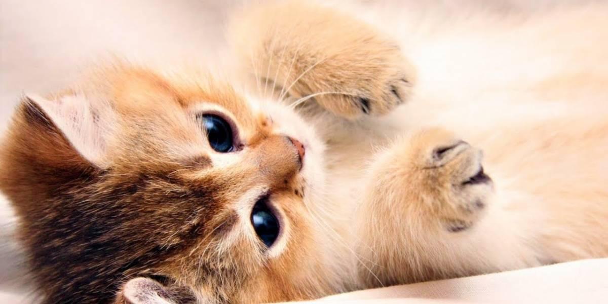 ¿Es amante a los gatos? Científicos confirman que los 'michis' pueden sonreír con los ojos