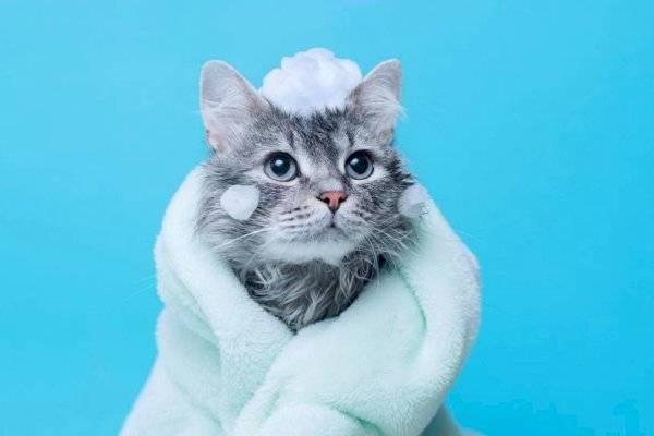 MeowTalk: ex ingeniero de Amazon crea un traductor de maullidos de gatos