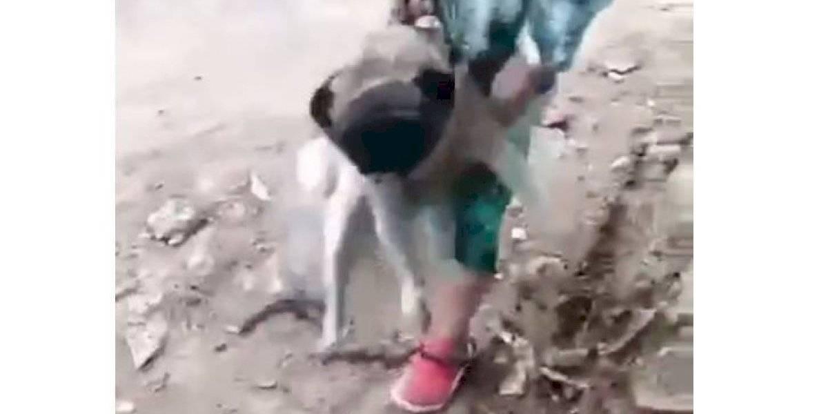 Niño fue filmado mientras lanzaba por un abismo a una perrita en el Tolima