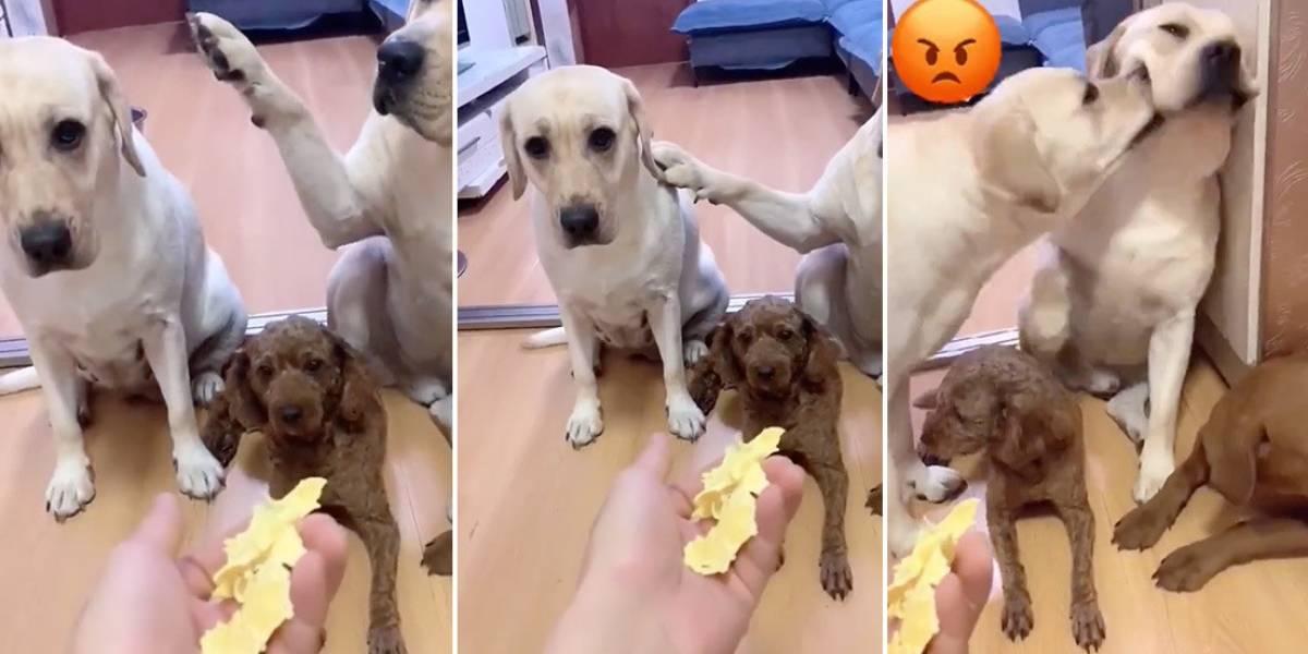 TikTok: Un perro que delata a su 'amigo' con la pata es la sensación