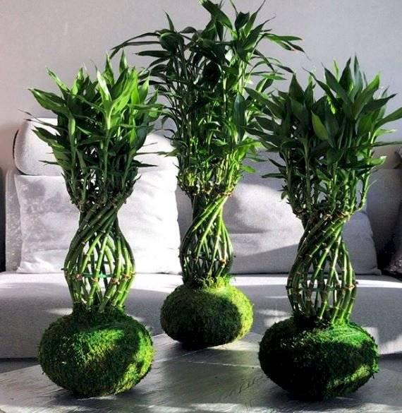 El bambú de la suerte es una planta que puede vivir tanto en tierra como en agua