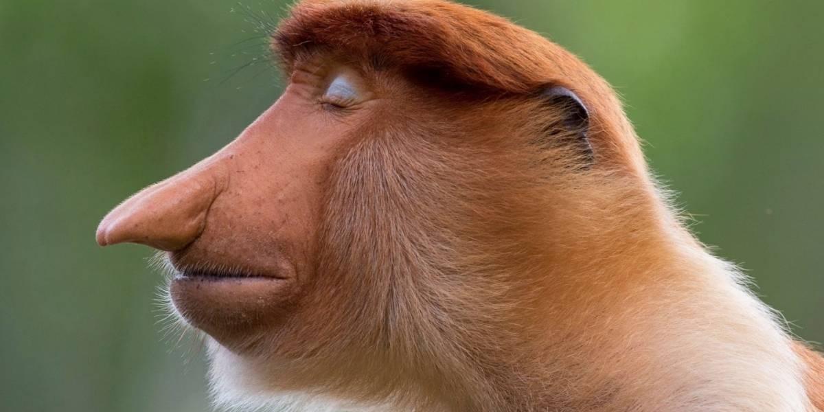 Estas son las mejores fotos de vida salvaje