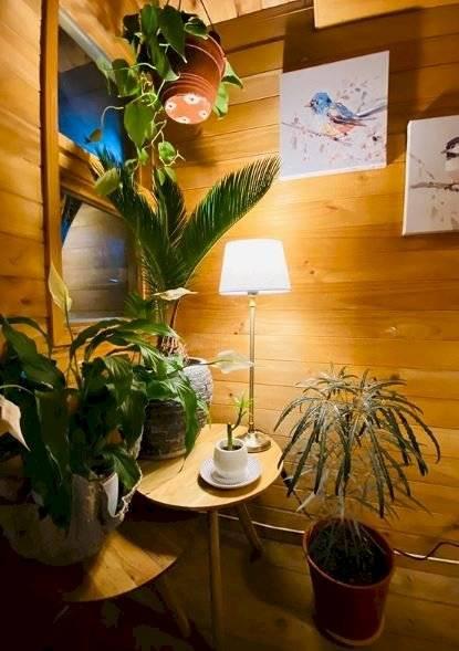 Las plantas acuáticas las puedes colocar en envases de vidrio, cristal o en macetas colgantes