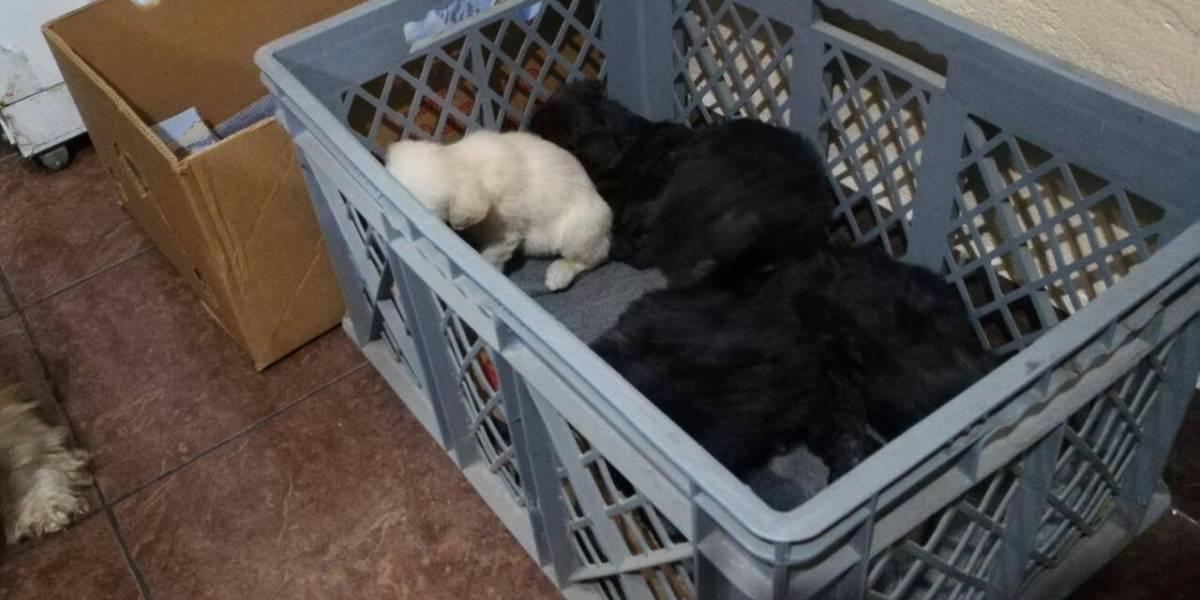 ¡Inhumano! Captan en video momento en que abandonan a una perrita y a sus cachorros en El Inca, norte de Quito