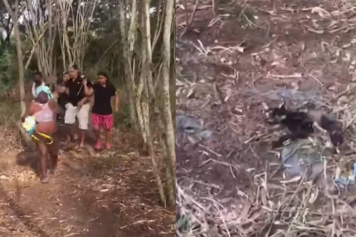 Video: Descubren a supuestas brujas que sacrificaban gatitos para sus  rituales | Publimetro Colombia