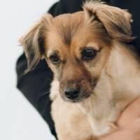 ¡Ejemplo! Otro perrito con mascarilla se roba los aplausos en redes sociales