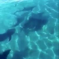 ¡Maravilloso! Captan a familia de delfines disfrutando de las playas de Cozumel