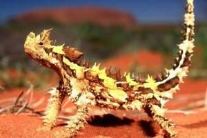 https://www.metrojornal.com.br/social/2020/10/22/aqui-estao-os-5-animais-exoticos-que-voce-possivelmente-nunca-viu.html
