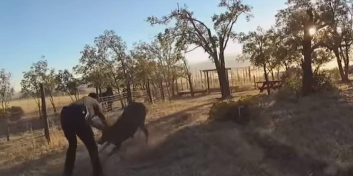 Vídeo: Após ser resgatado, cervo se revolta e ataca oficiais