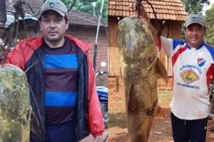 https://www.metrojornal.com.br/social/2020/10/22/video-homens-pescam-jau-monstruoso-de-44-kg.html