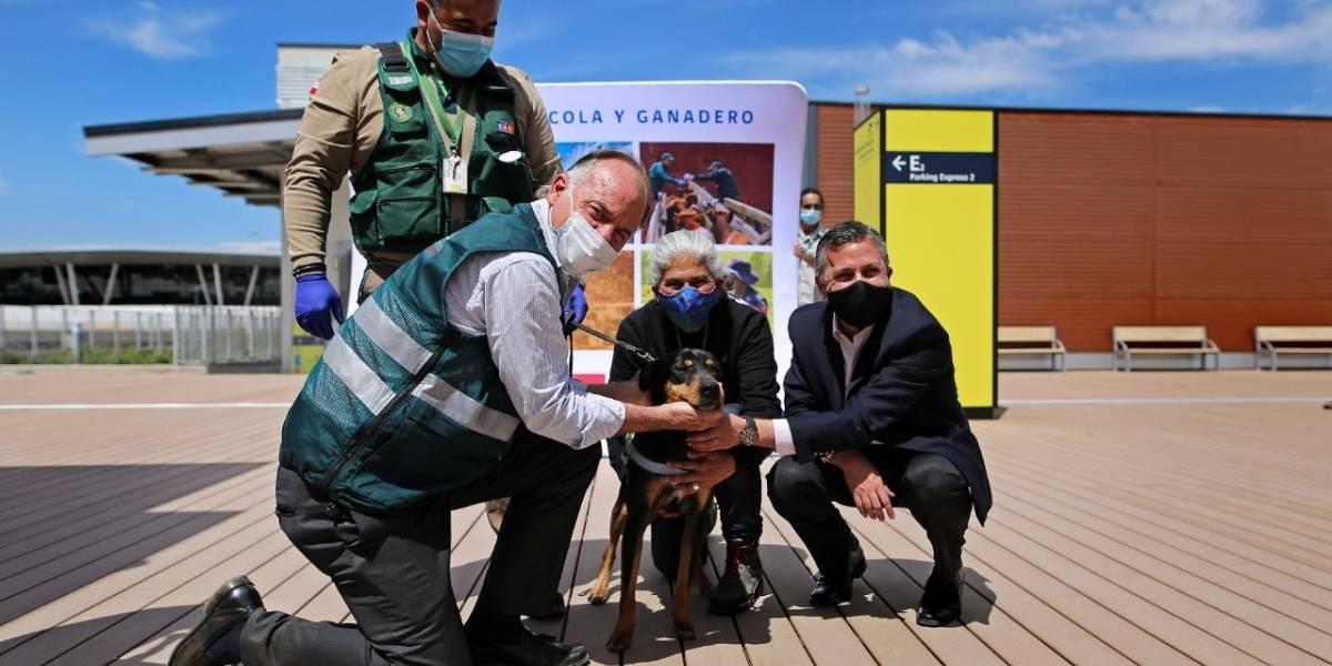 A lo Paw Patrol: perros rescatados se gradúan y entran a trabajar a la Brigada Canina del SAG