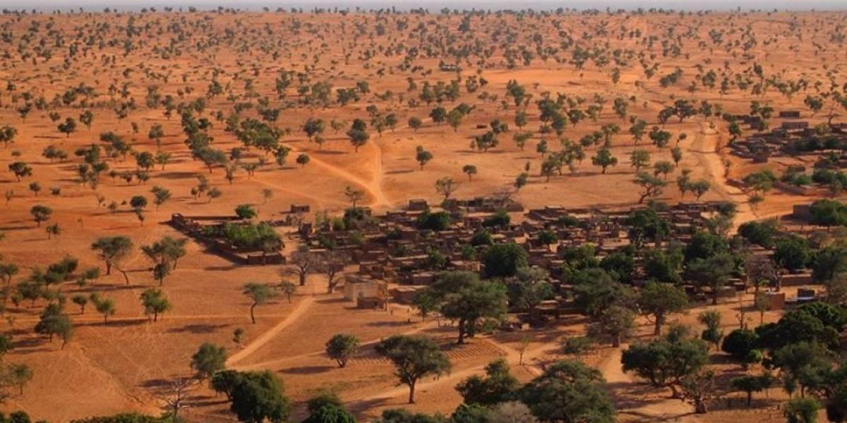 ¡Increíble! Hallan más de 1.800 millones de árboles en el desierto del Sahara
