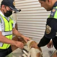 Agentes de la CTE rescatan a un cachorro atropellado y pagan los gastos veterinarios