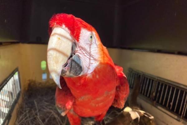 (VIDEO) Más de 400 animales silvestres rescatados en Bogotá fueron liberados en el Caribe