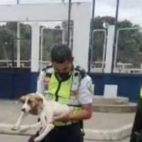 Cachorro atropellado regresó con su familia gracias a la labor de agentes de la CTE, en El Oro