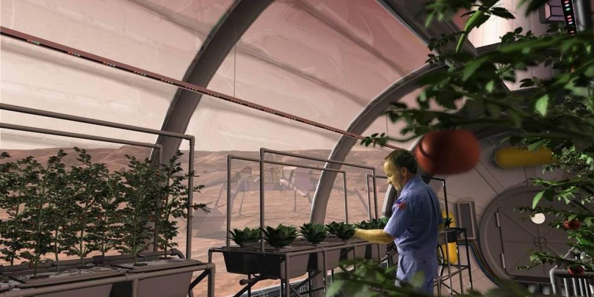 De esta manera los científicos comienzan a preparar los cultivos sobre la superficie de Marte