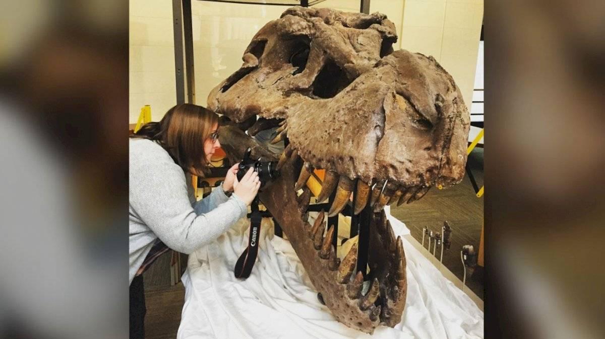 Sue, el tiranosaurio rex.
