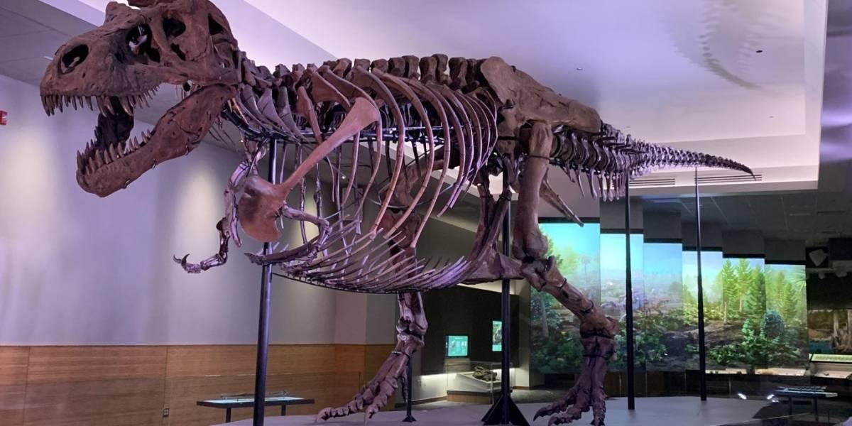 Científicos revelan la dolorosa causa de muerte de un tiranosaurio rex