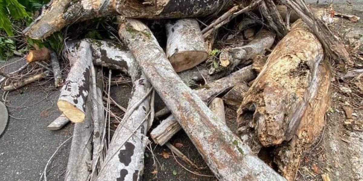 UPR en Río Piedras aclara la tala de árboles en el recinto