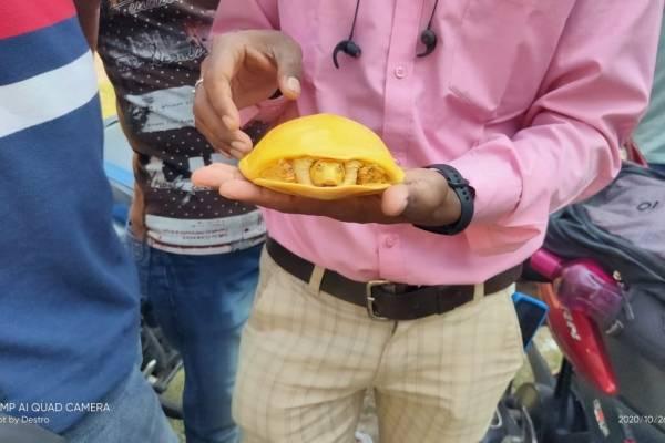 Sorprendente hallazgo de tortuga amarilla en India: es la segunda encontrada este año