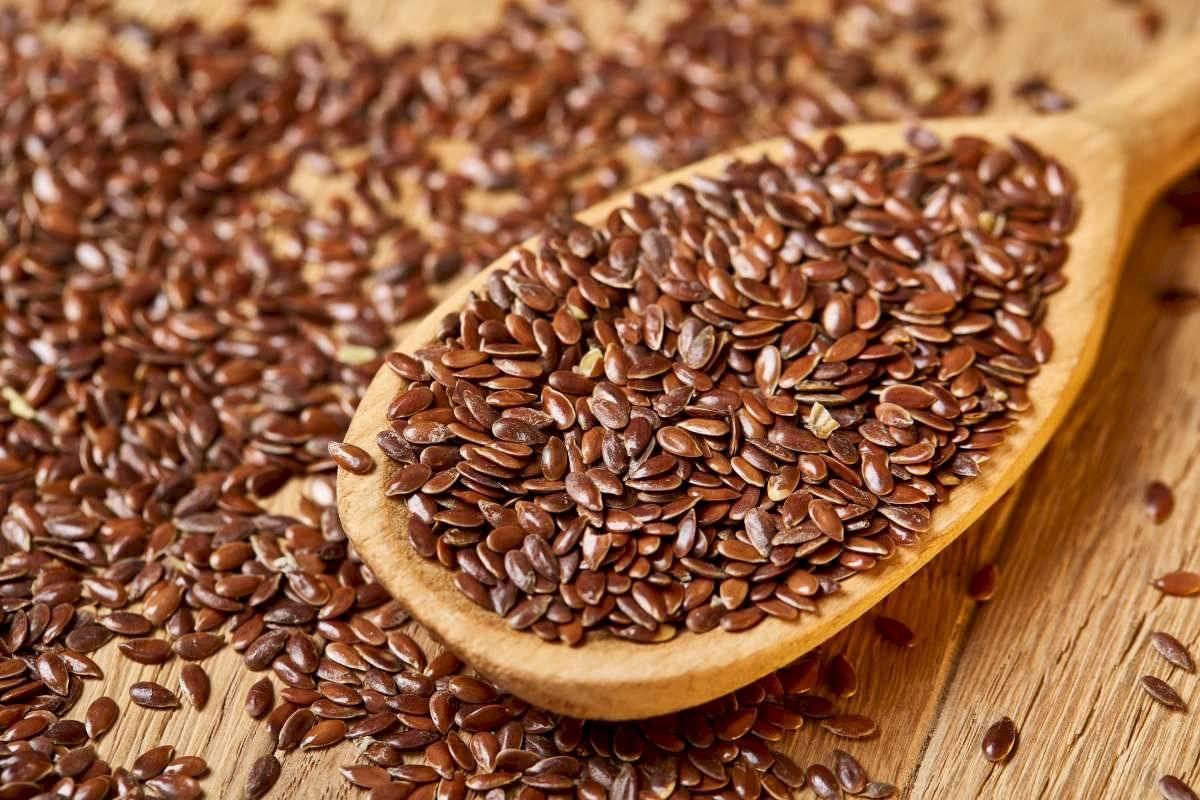 Linaza o semillas de lino
