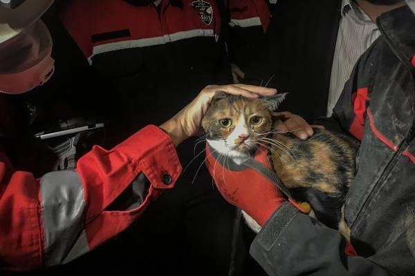 Gato es rescatado tras 30 horas bajo los escombros tras terremoto en Turquía: fue hallado por perro de rescate