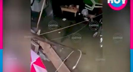 Cocodrilo apareció nadando en la sala de una casa inundada en México