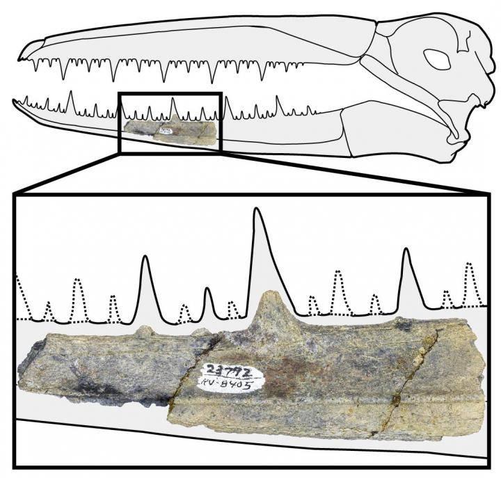 La muestra de una de las aves prehistóricas.