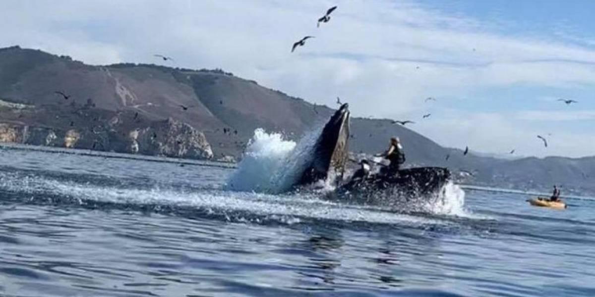 (VIDEO) Impresionante: una ballena jorobada casi devora a 2 mujeres