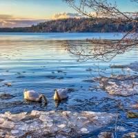Gratuito! Feira virtual ajudará os interessados em estudar na Suécia