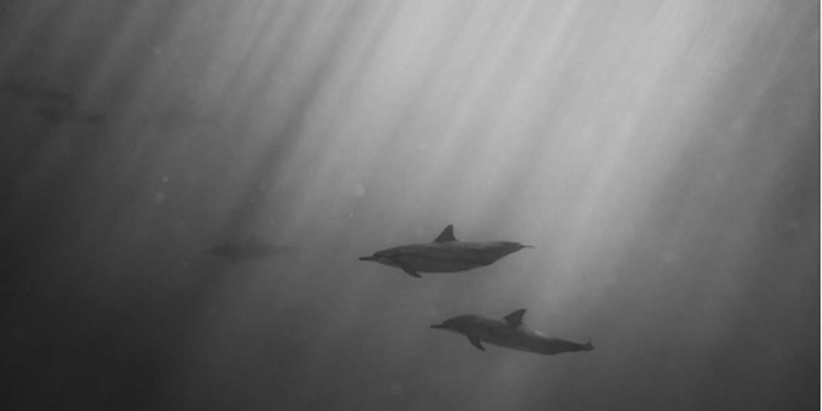 """Hallan delfines mutilados en playas españolas, uno de ellos tenía tallado el nombre """"Juan"""""""
