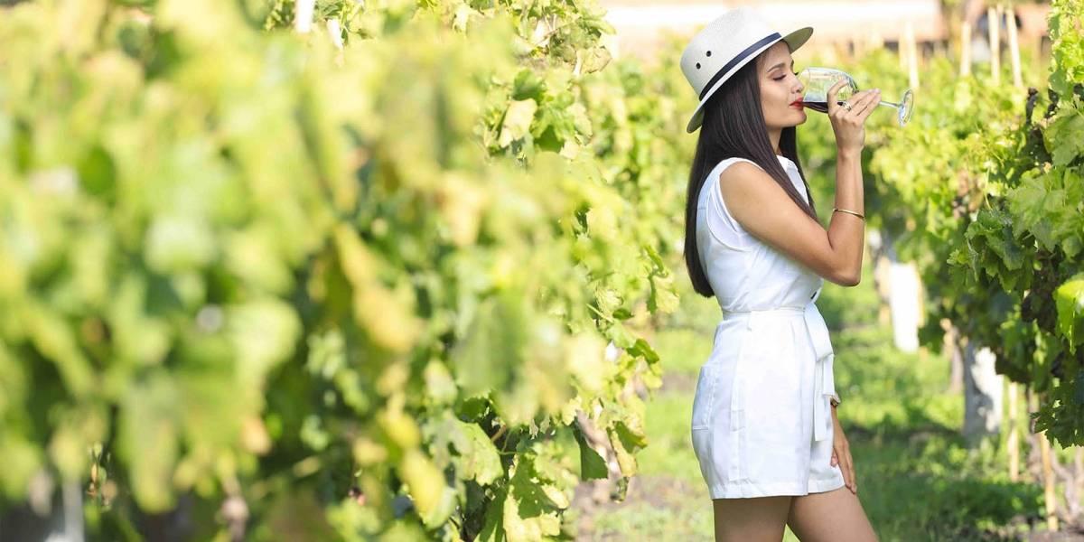 Vive la experiencia del vino en Guanajuato, cinco rutas imperdibles
