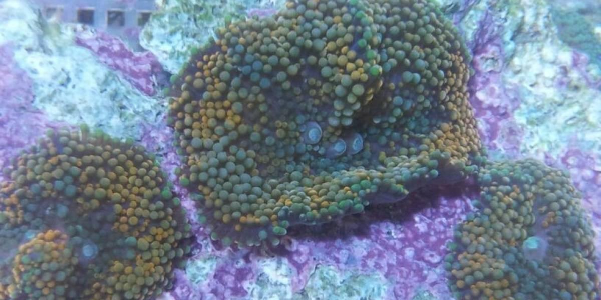 Sentencian a prisión a dueño de acuario en Arecibo por tráfico de corales