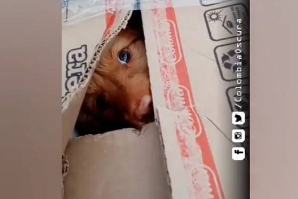 (VIDEO) Rescatan a cachorrito que abandonaron en Bogotá en caja completamente sellada con cinta
