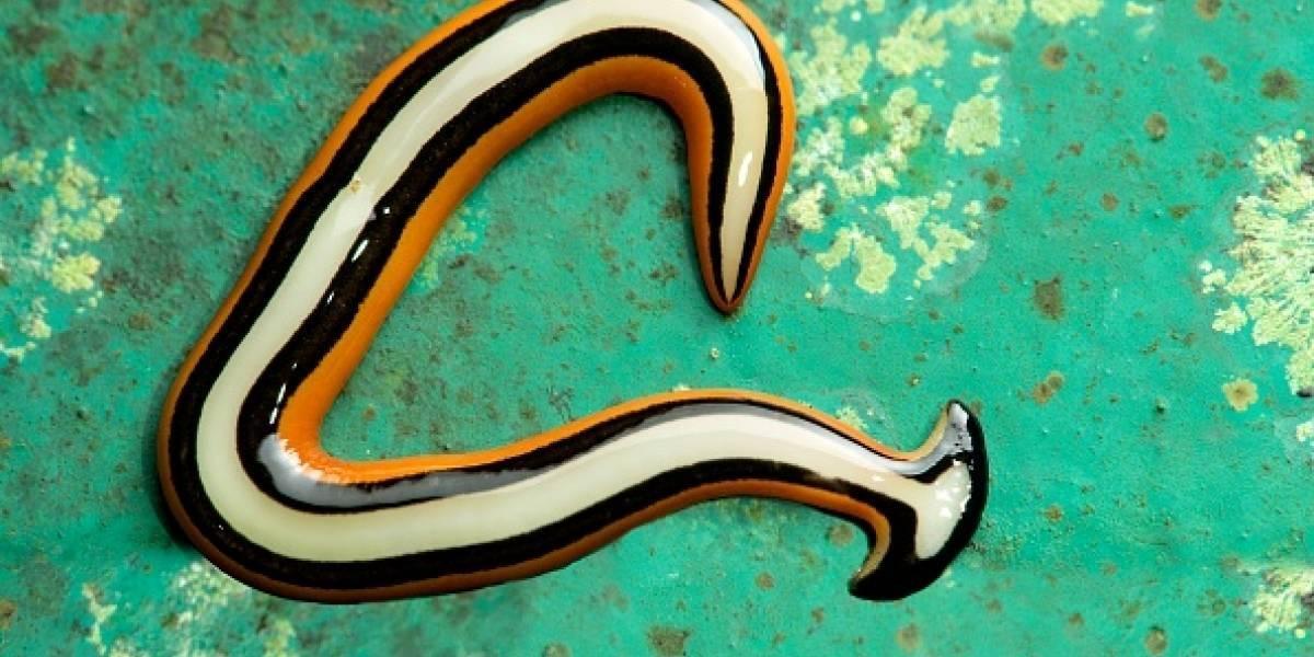 Encuentran extraño gusano en Estados Unidos