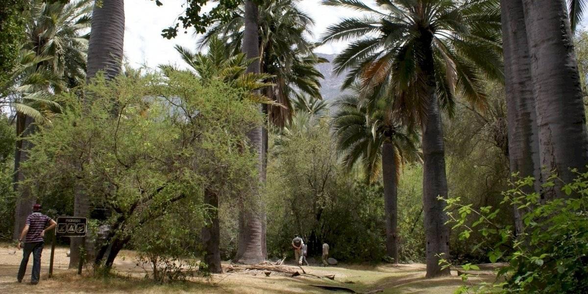 Parques nacionales: estos son los que están abiertos y sus restricciones