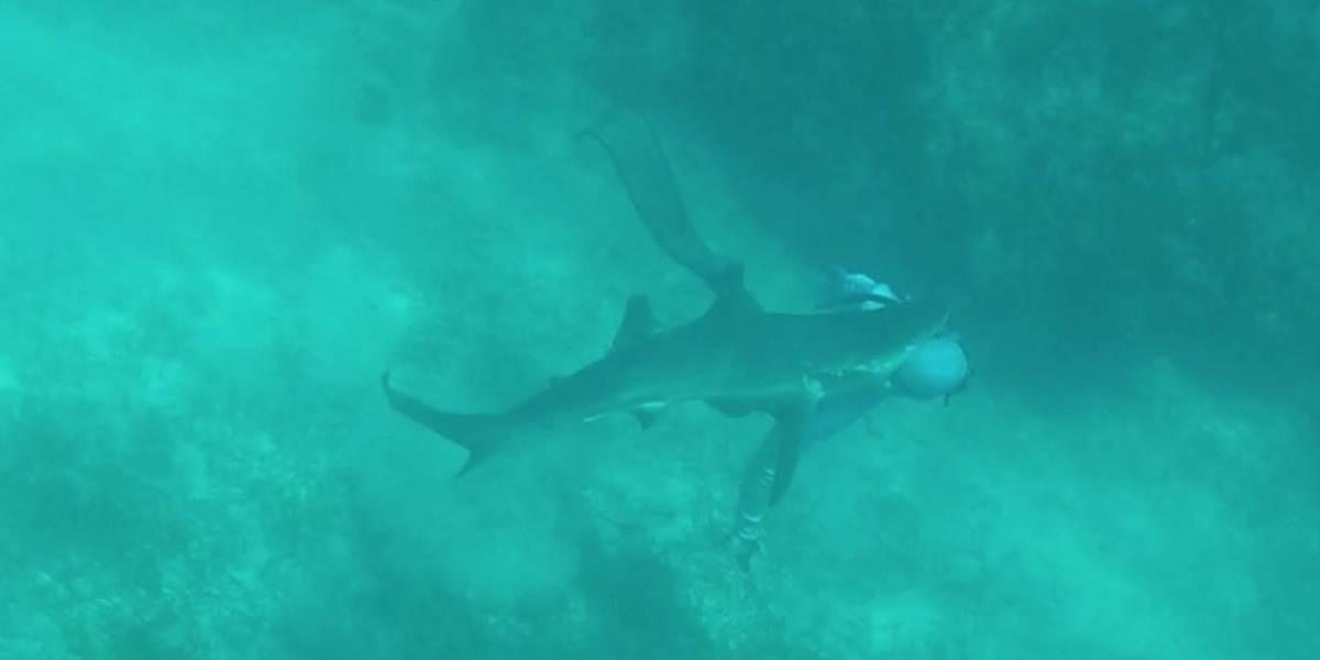 (Video) Impresionante momento en el que una pareja de buzos se topan con cientos de tiburones