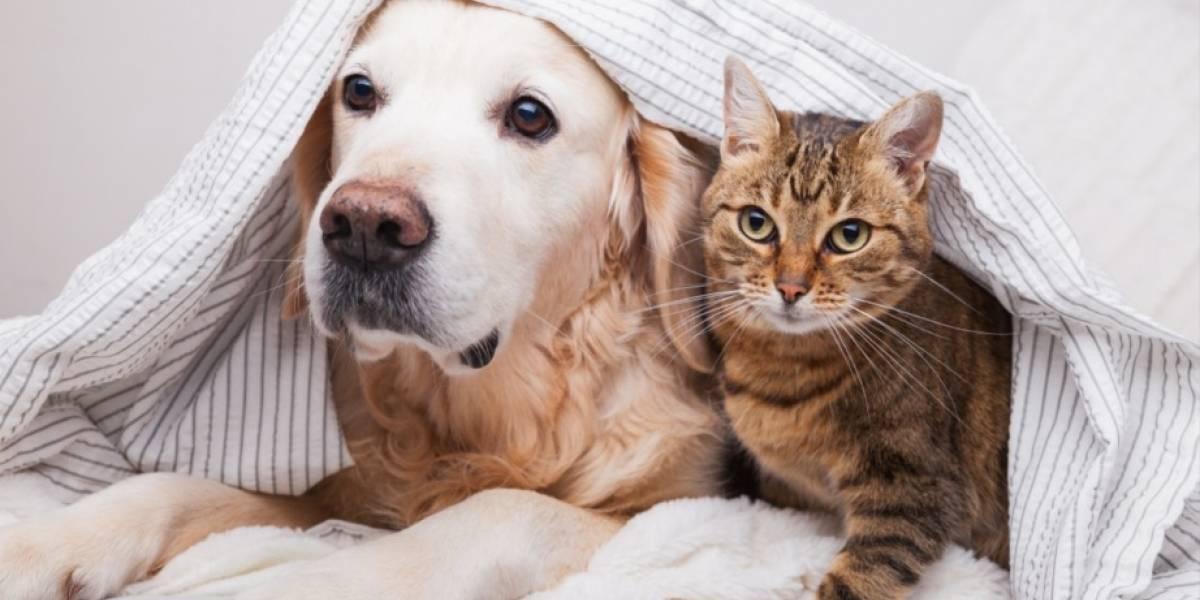 Ringo y Mirringo: Un cachorro lo cambia todo