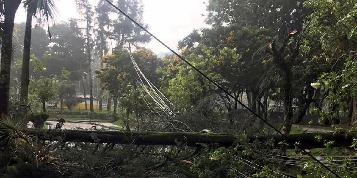 Árboles caídos y múltiples inundaciones, los saldos de las intensas lluvias en Bogotá