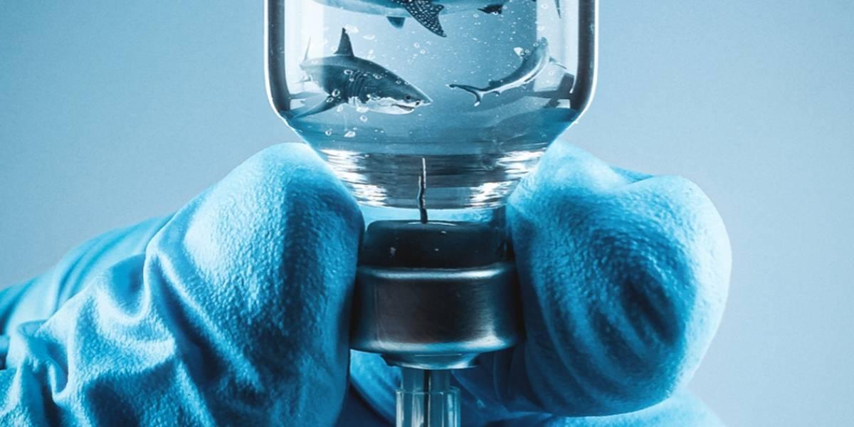 La vacuna Covid-19 podría afectar a miles de tiburones en el mundo