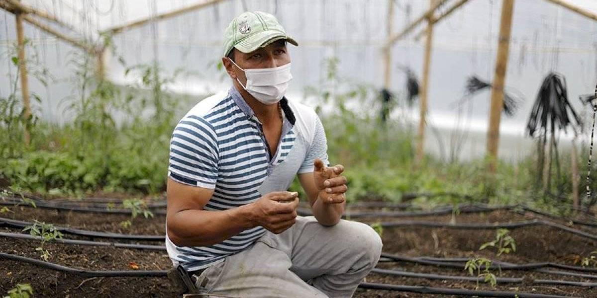 Producción de alimentos orgánicos, una necesidad en tiempos de pandemia