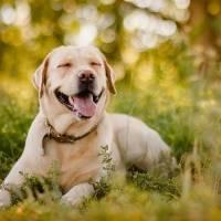 Adorables: Los perros tienen la capacidad de sonreír, según la UNAM