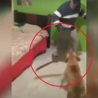 Vídeo inusitado mostra pitbull com facão atacando jovem; assista