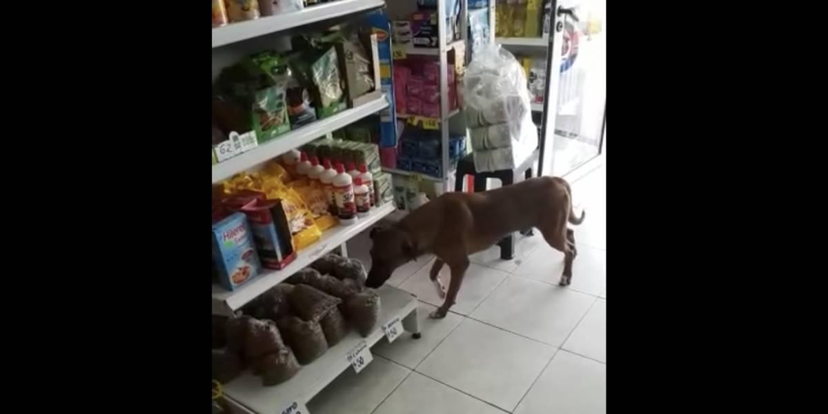 (Video) Perrito ladrón hurta bolsa de concentrado y enamora a todos en redes sociales