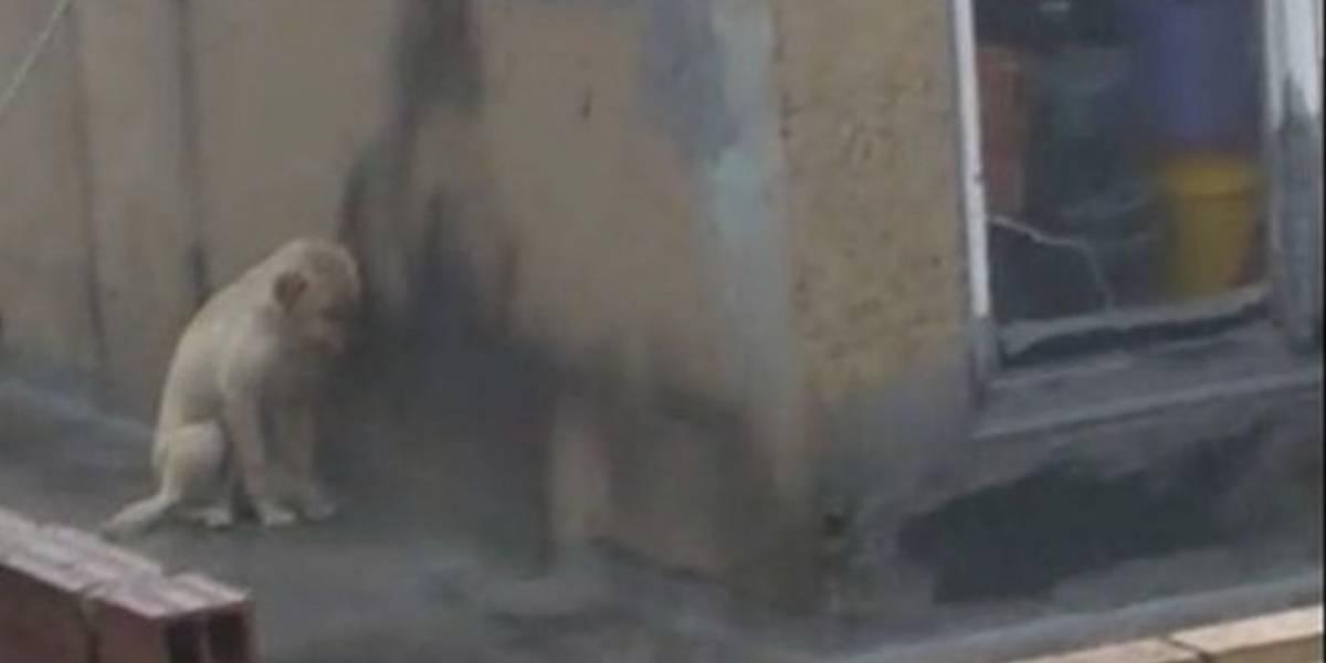Circula en redes sociales denuncia de maltrado animal de perrito mojándose en medio de aguacero